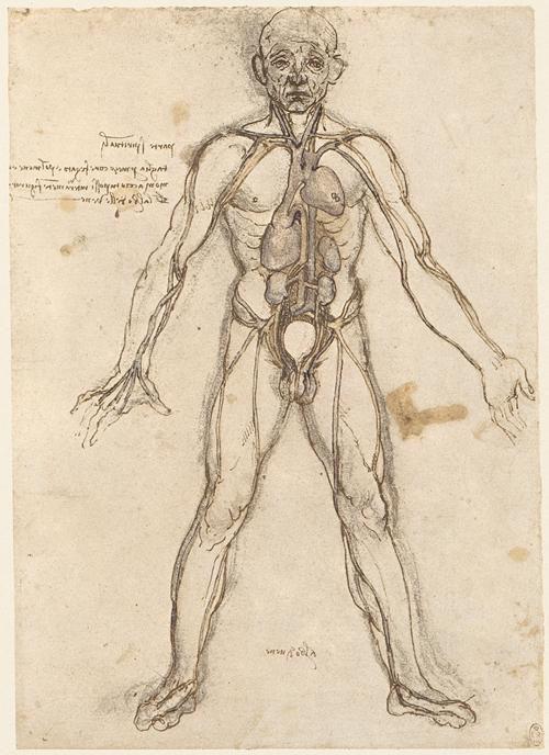 UB Heidelberg: V. Tabulae anatomicae: Anatomische Illustrationen des ...