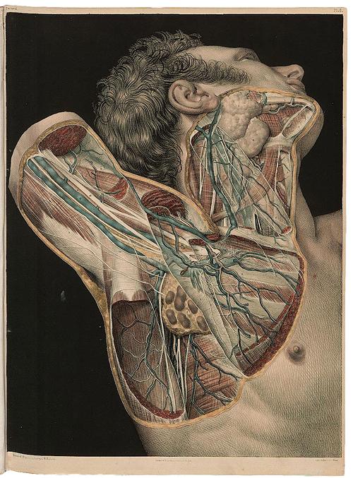 Anatomie Ausstellung